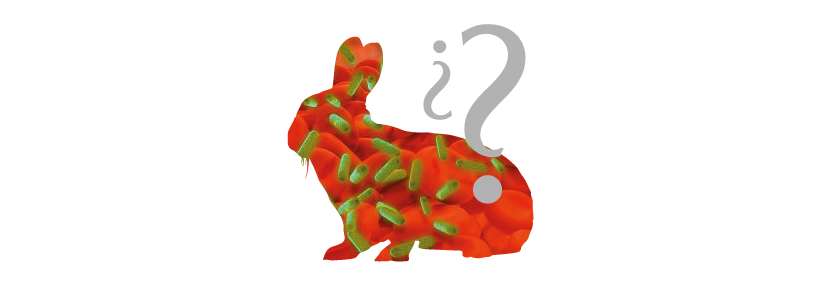 procesos-asintomaticos-conejos