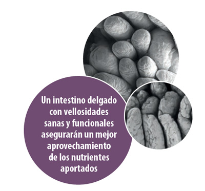 intestino-delgado