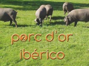 Porc d'Or Ibérico