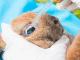 granjas de conejos